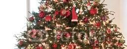 Entrega y recogia de Árboles de Navidad